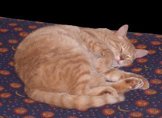 cat_orange_sleep-327x238.jpg